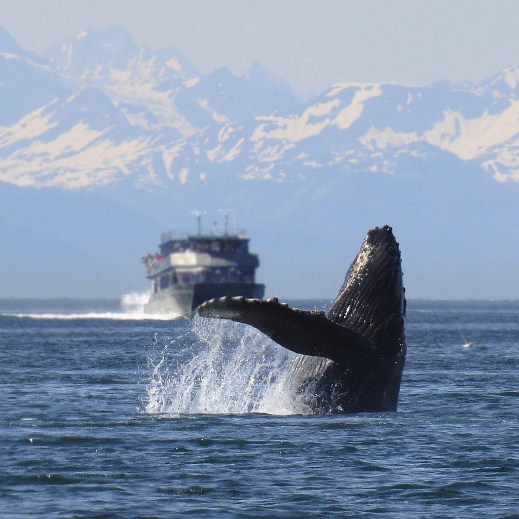 humpback-1132769_1280
